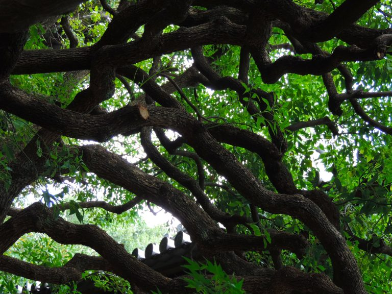 The roots of ages, Tokyo, Japan 2015